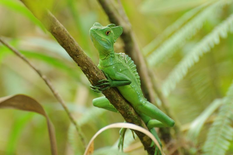 KEV_9014-green-lizard