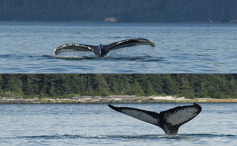 P8043772-blog-whale-tails